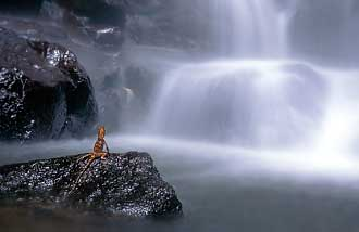 Blurred waterfall with a long shutter speed and lizard